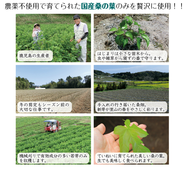国産桑の葉DNJタブレット栽培