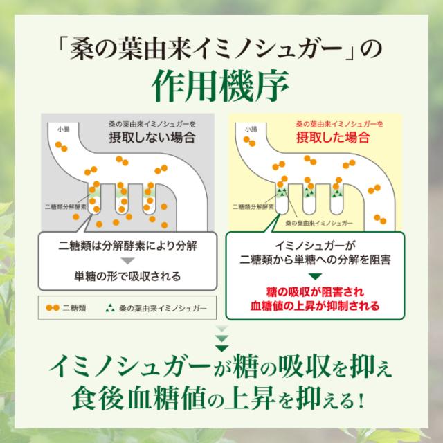 糖吸収阻害作用機序