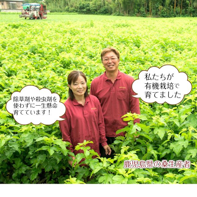 有機桑葉顆粒青汁生産者画像2