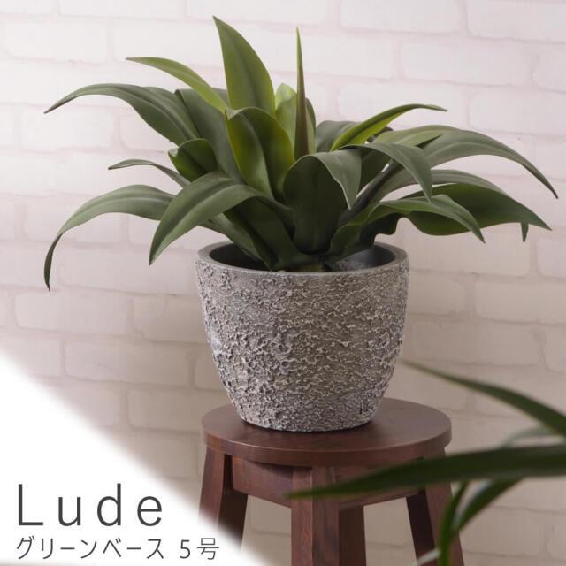 Lude(ルード) グリーンベース 5号