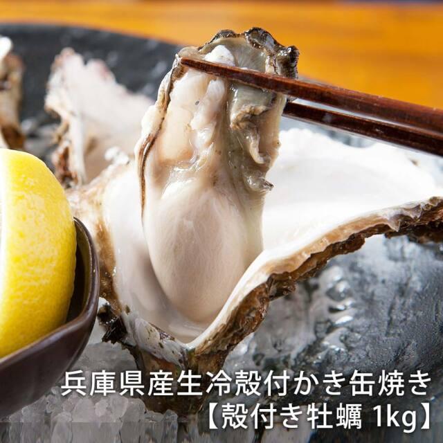 【産地直送】兵庫県産生冷殻付かき缶焼き 「殻付き牡蠣 1kg」 【かき屋 錦・だいやす】