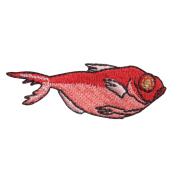 KYWS-758/ワッペン/金目鯛/きんめだい/【ゆうパケット可】