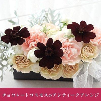 【送料無料】 チョコレートコスモスのアンティークアレンジ