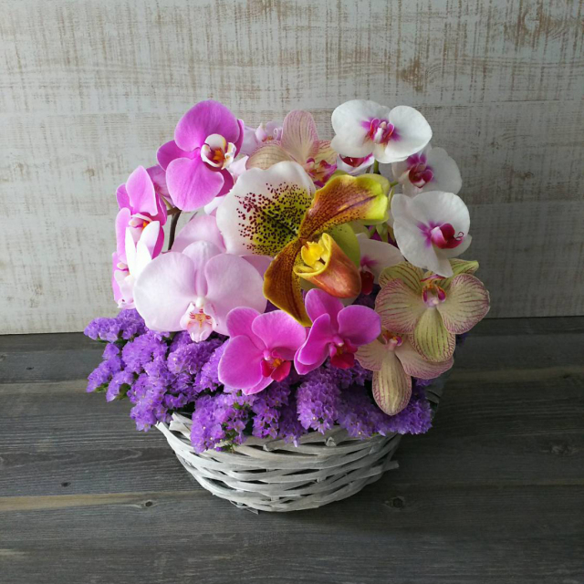 【送料無料】 御祝アレンジメント<おまかせ・胡蝶蘭> ~ 令和アレンジ ~