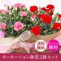 母の日 カーネーション鉢花 母の日の定番カーネーション鉢5号鉢レッド、ピンク2鉢セット