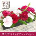 敬老の日ギフトダリアとバラのスクエアアレンジメント ダリア バラ 送料無料 そのまま飾れるアレンジメント 花 プレゼント