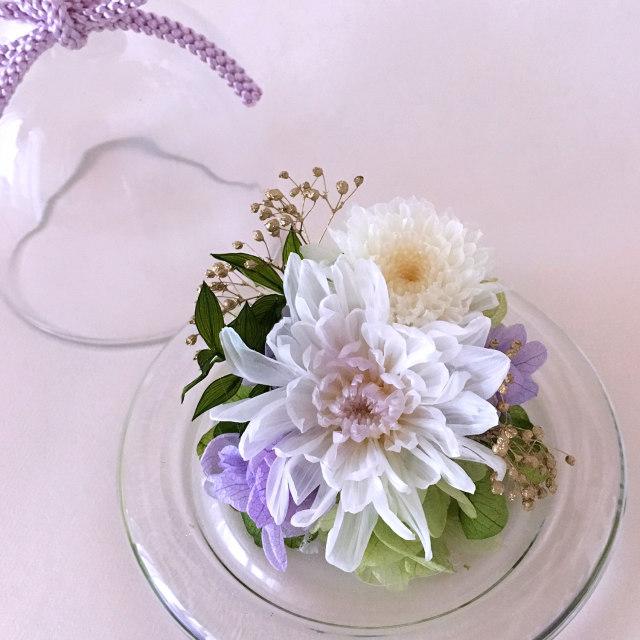 豆菊(ホワイト)02