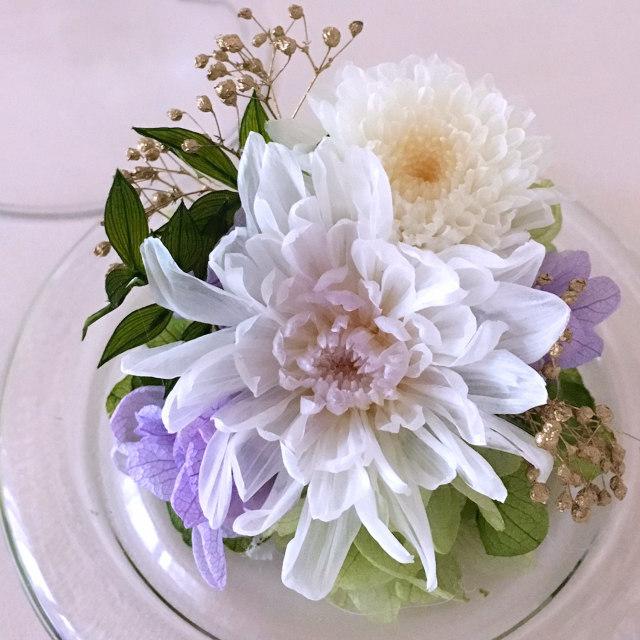 豆菊(ホワイト)03