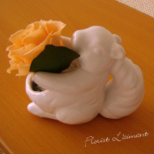 スマイルチッピー(オレンジ)【プリザーブドフラワー】