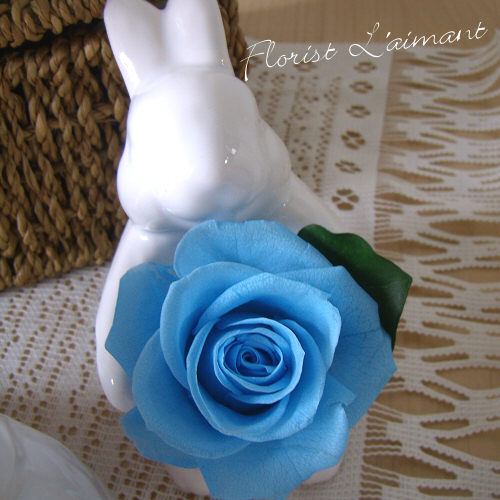 サンクスラビット(ブルー)【プリザーブドフラワー】