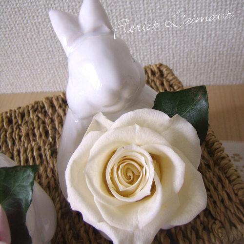 サンクスラビット(ホワイト)【プリザーブドフラワー】