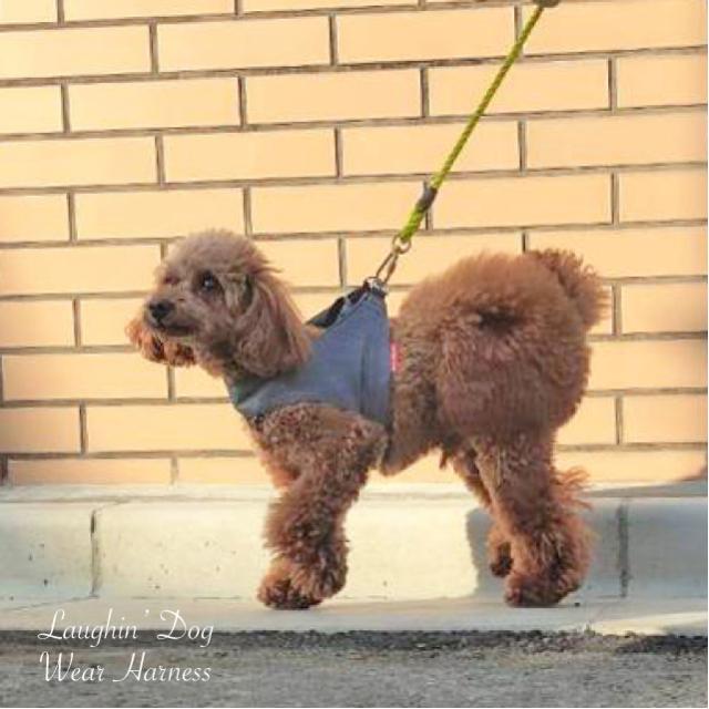 ラフィンドッグ 着脱が簡単で愛犬にかかる負担が軽いウエアハーネス アウトラスト デニムプリント