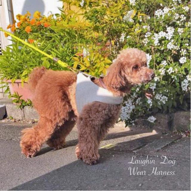 ラフィンドッグ 着脱が簡単で愛犬にかかる負担が軽いウエアハーネス アウトラストリネン