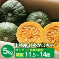 中橋かぼちゃ5kg