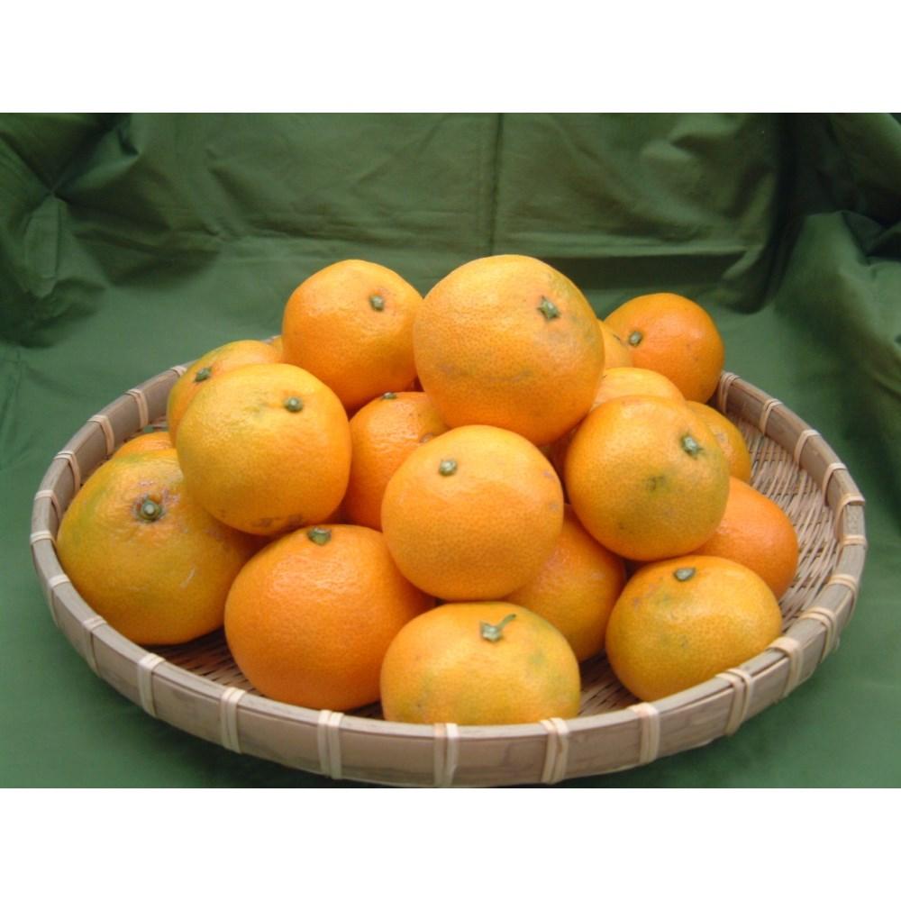 【リマ特選産直品】★期間・数量限定★上山さんの温州みかん 5kg