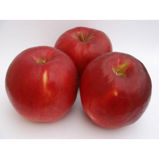 【リマ特選産直品】 竹嶋さんのりんご サン・紅玉(こうぎょく) 約4.5kg【一段詰】(約18玉~23玉)
