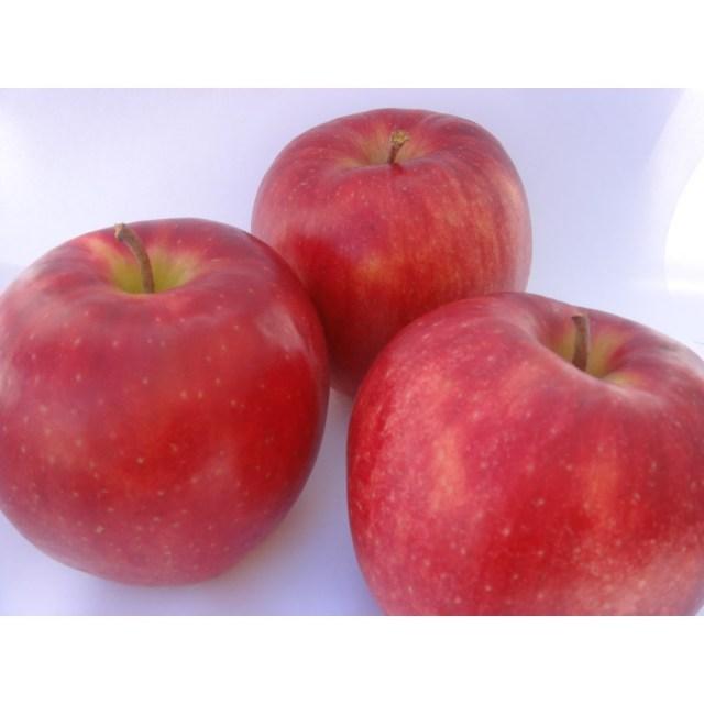 【リマ特選産直品】 竹嶋さんのりんご サン・ジョナゴールド 5kg【一段詰】(約16玉~18玉)