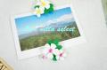 【ハワイアン】◆プルメリア(フランジパニ)のマグネット402937