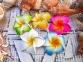 【アジアン】◆プルメリア(フランジパニ)造花S(5ケセット) 501301