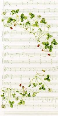 日本製 ミュージックイチゴ 多目的 のし封筒