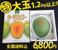 沖縄キーツマンゴー特大玉1.2kg以上(1玉)【送料無料】