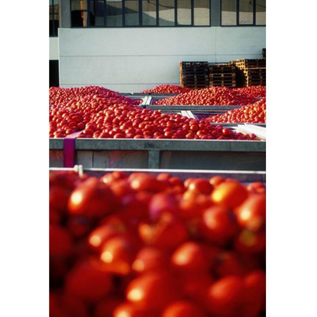 有機トマトピューレー 200g オーガニック トマト収穫 alce nero アルチェネロ