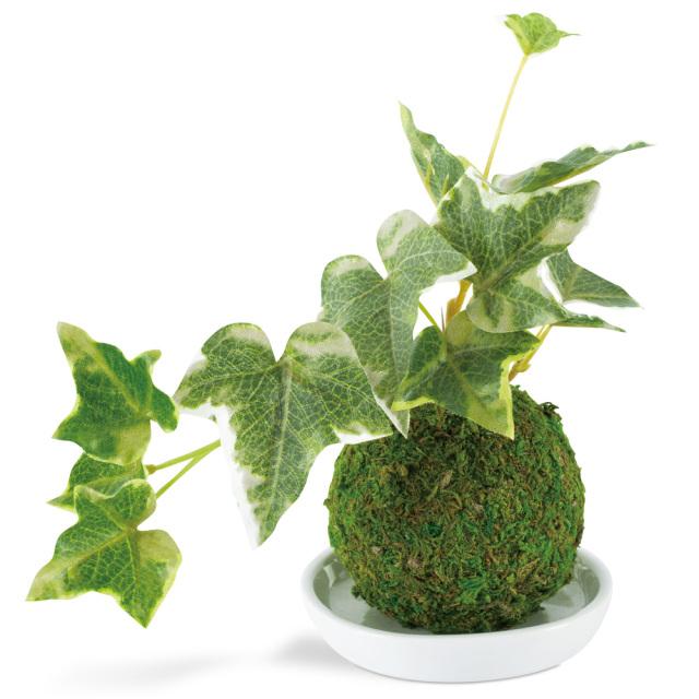 和盆栽 消臭アーティフィシャルグリーン セイヨウツタ 空気清浄 フェイク KISHIMA KH-61058