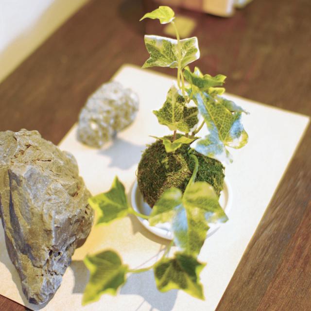和盆栽 消臭アーティフィシャルグリーン セイヨウツタ 空気清浄 フェイク KISHIMA KH-61058 使用風景