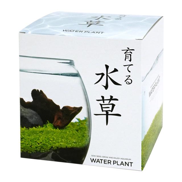 育てる水草 栽培キット Lサイズ アクアリウム ガラス鉢 流木 苔 聖新陶芸