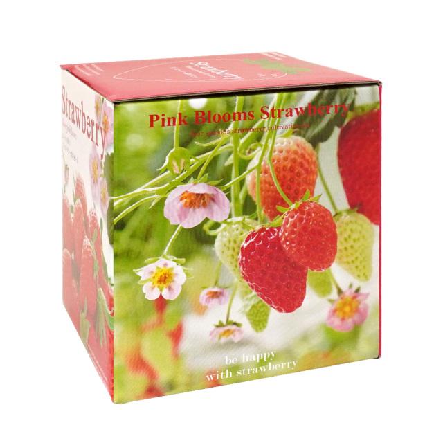 ピンクの花咲くストロベリー栽培キット ハートポット 観葉植物 インテリア 聖新陶芸 パッケージ