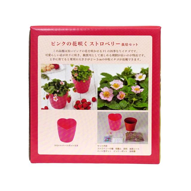 ピンクの花咲くストロベリー栽培キット ハートポット 観葉植物 インテリア 聖新陶芸  セット内容