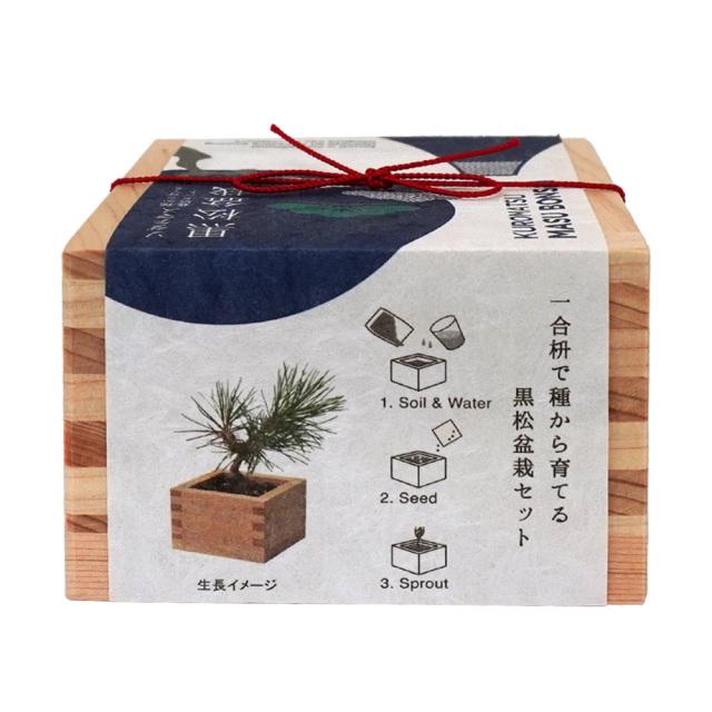 ソダテマス盆栽栽培セット 黒松 ヒノキ升 聖新陶芸 育て方
