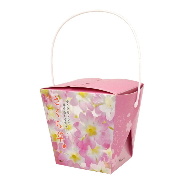Floral Container フローラルコンテナ お花の栽培キット サクラ草 プリムローズ 聖新陶芸