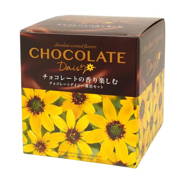 チョコレートデイジー栽培セット 聖新陶芸