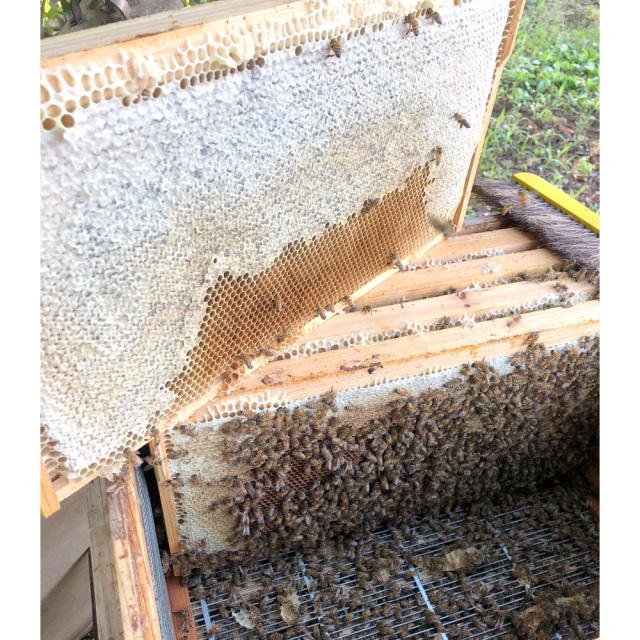 田舎はちみつ あかぼっけ 五霞町 非加熱 生蜂蜜 巣箱