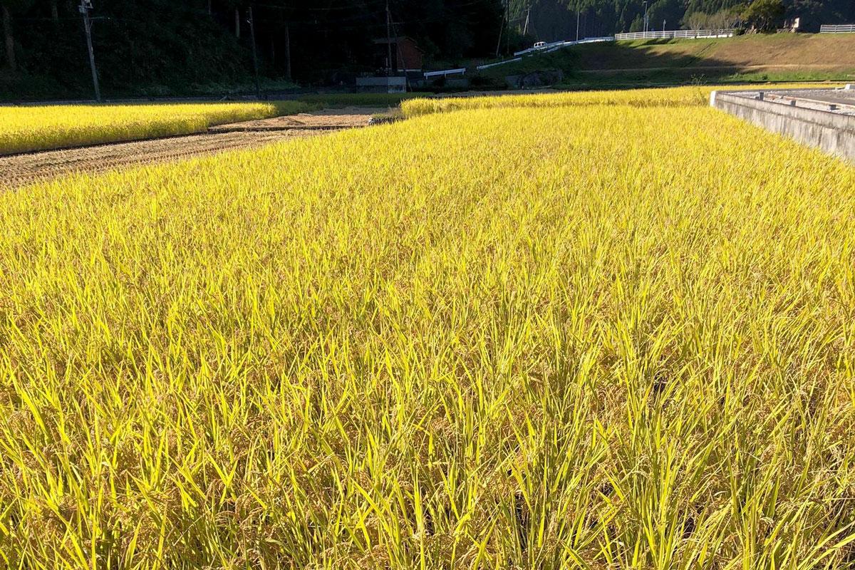 大分県産 お米