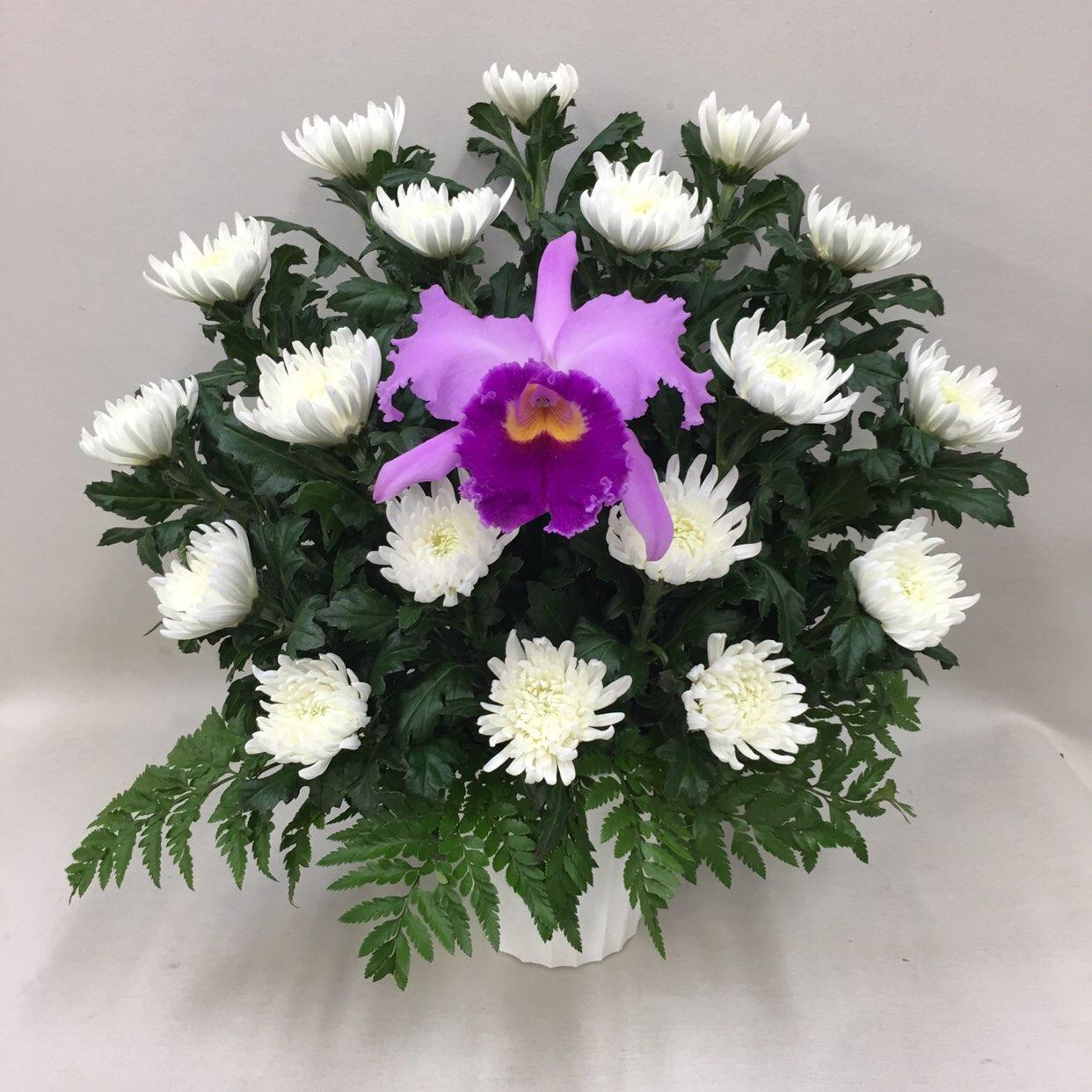 3322 【供花】カトレアと菊のアレンジメントW(H50) Cスタイル