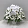3320 【供花】胡蝶蘭とトルコキキョウのアレンジ(H50) Cスタイル