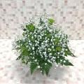 3459 ホワイト×グリーン カスミ草 アレンジメント Cスタイル