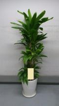 観葉植物 おまかせオーダー