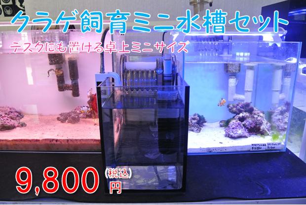 クラゲ飼育ミニ水槽セット(15cm水槽)