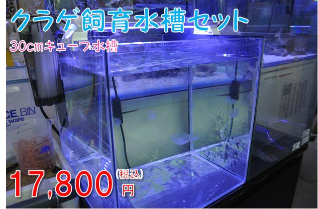 クラゲ飼育水槽セット(30cmキューブ水槽)