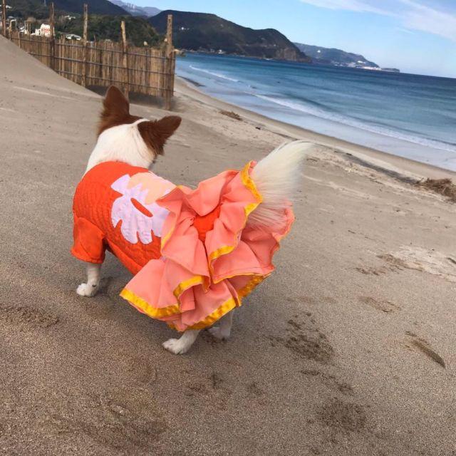 犬 服 秋冬 ハワイアンキルト ドックウエア パーカー スカート ペット用品 犬 2019秋冬 人気 おススメ オシャレ 通販 白浜マリーナ