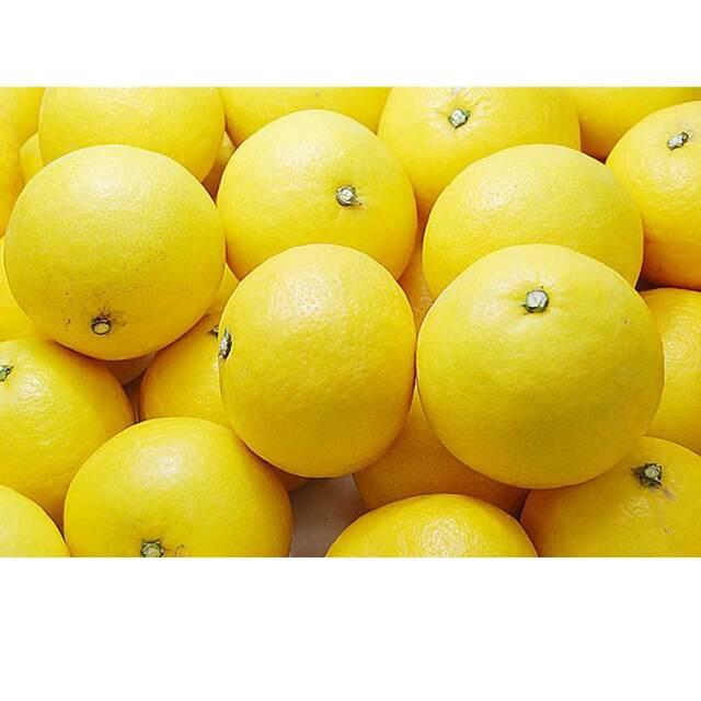 にゅーさまーおれんじじゃむ 260g 伊豆 特産 農協 JA ニューサマーオレンジ  日向夏 フルーツ