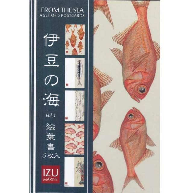 CICADA 5枚入り絵葉書 FROM THE SEA/ポストカード 金目鯛 サヨリ 伊勢海老 サバの干物 稚鯛