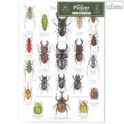 cicada ミニポスター 昆虫 3枚セット mini Poster collection