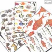 cicada 和紙はがき ばら売り 海シリーズ 魚 ポストカード