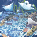 LOOK & TOUCH ADULT MANTA RAYS T-SHIRTS