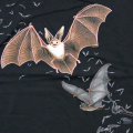 LOOK & TOUCH ADULT GOING BATTY T-SHIRTS M