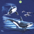 LOOK & TOUCH ADULT ORCAS T-SHIRTS